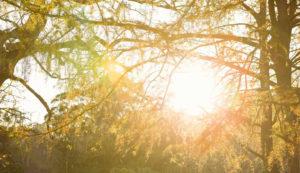 Solaranlage und Umwelt